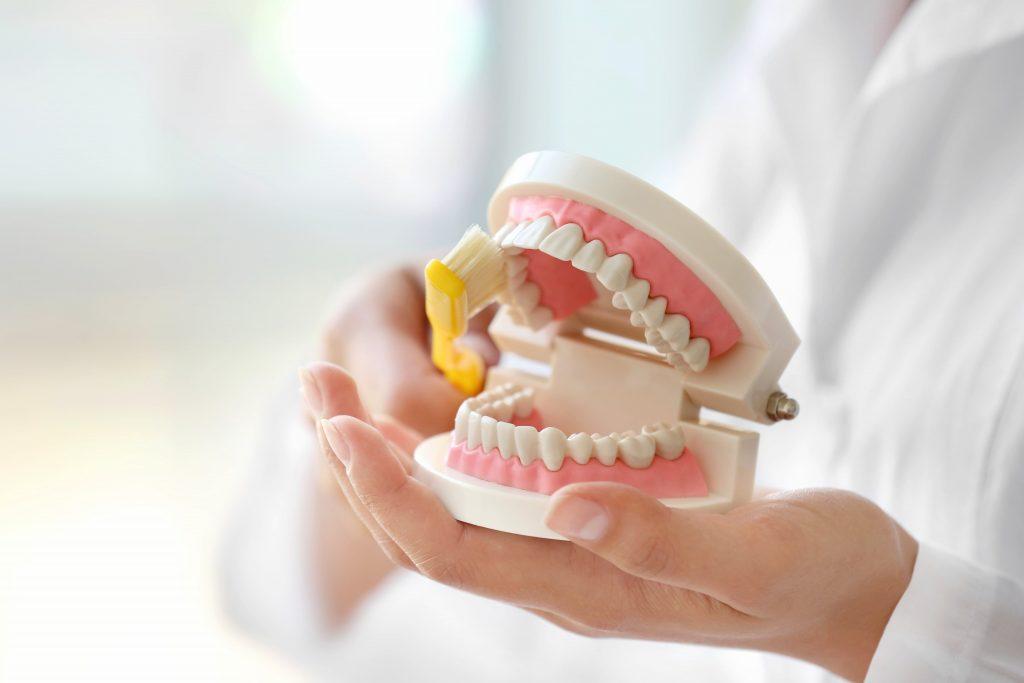 Zahnarzt hält ein Gebiss